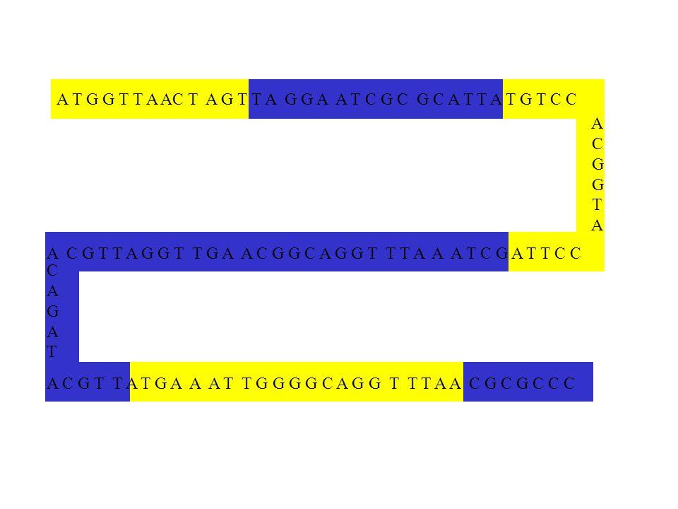 A C G T A A T G G T T A AC T A G T T A G G A A T C G C G C A T T A T G T C C A C G T T A G G T T G A A C G G C A G G T T T A A A T C G A T T C C A C G