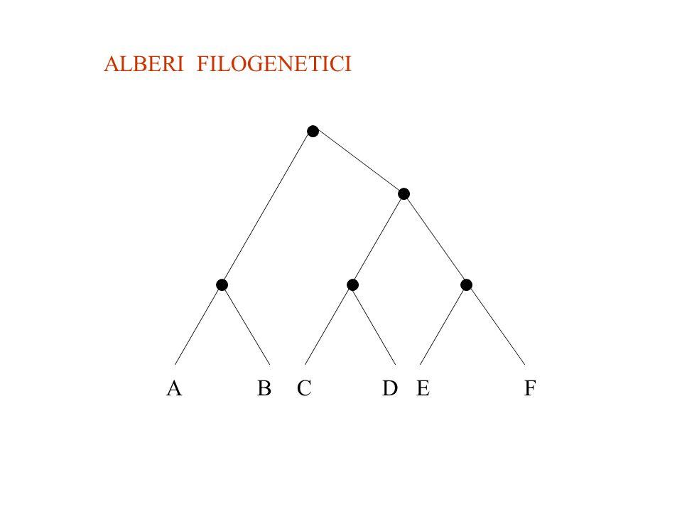 ALBERI FILOGENETICI ABCDEF