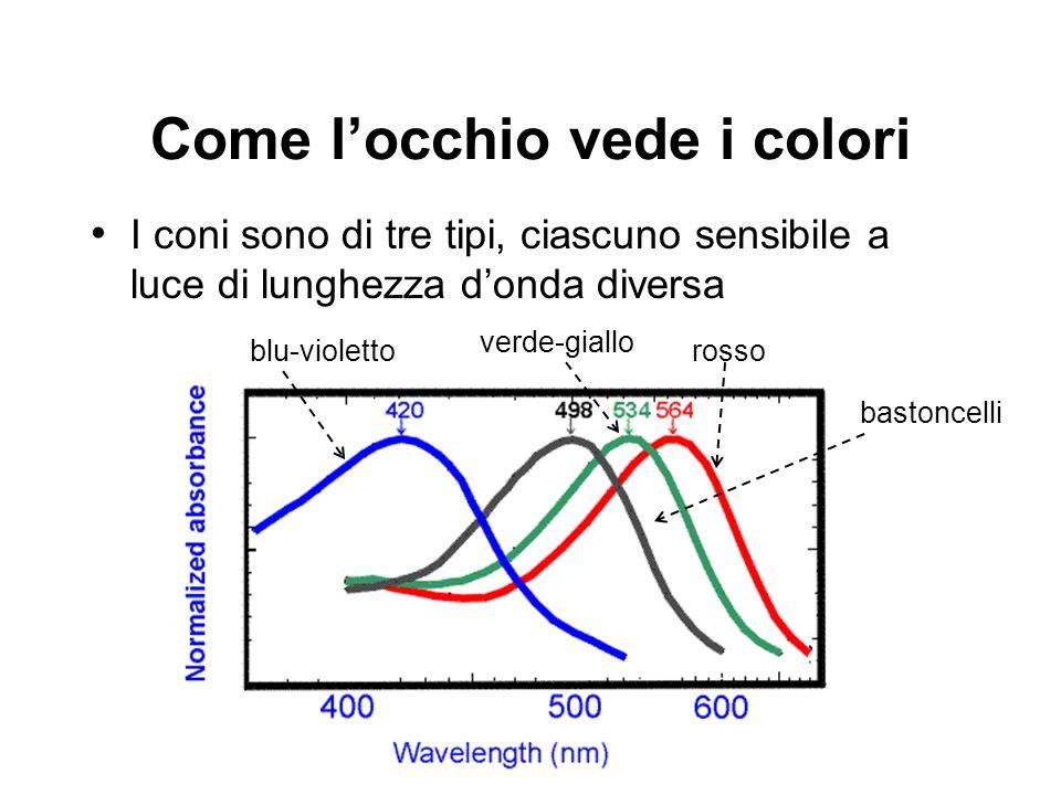 Come locchio vede i colori I coni sono di tre tipi, ciascuno sensibile a luce di lunghezza donda diversa bastoncelli rosso verde-giallo blu-violetto
