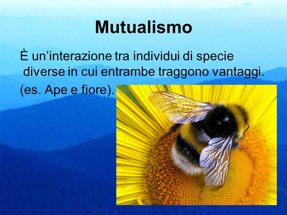 Mutualismo È uninterazione tra individui di specie diverse in cui entrambe traggono vantaggi. (es. Ape e fiore).