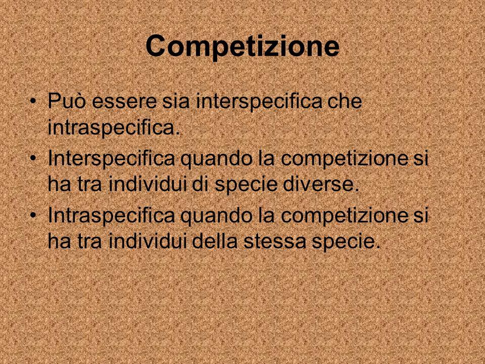 Competizione Può essere sia interspecifica che intraspecifica. Interspecifica quando la competizione si ha tra individui di specie diverse. Intraspeci