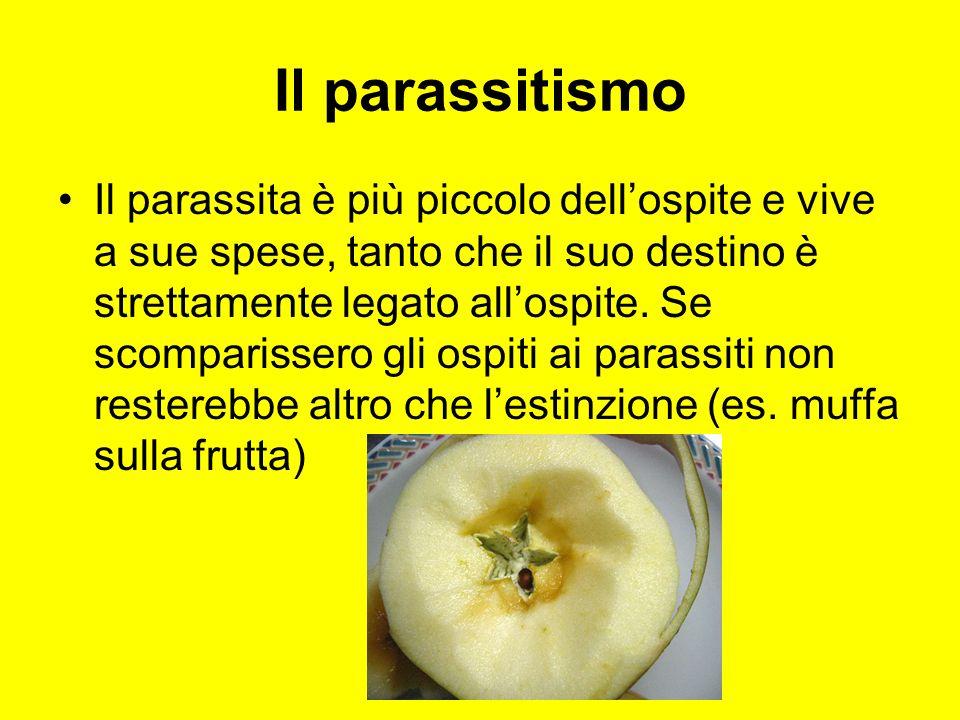 Il parassitismo Il parassita è più piccolo dellospite e vive a sue spese, tanto che il suo destino è strettamente legato allospite. Se scomparissero g