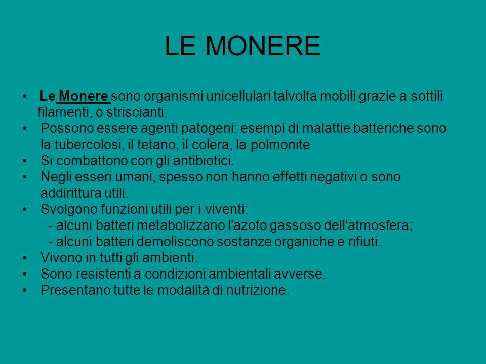 LE MONERE Le Monere sono organismi unicellulari talvolta mobili grazie a sottili filamenti, o striscianti. Possono essere agenti patogeni: esempi di m