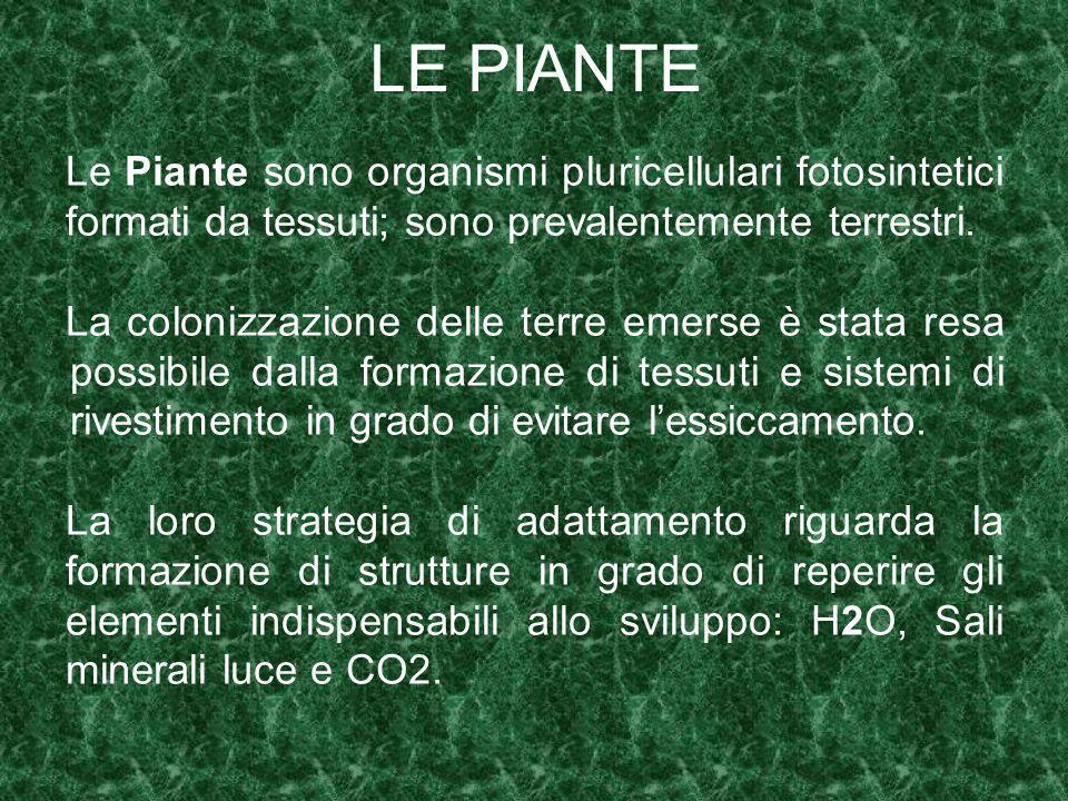 LE PIANTE Le Piante sono organismi pluricellulari fotosintetici formati da tessuti; sono prevalentemente terrestri. La colonizzazione delle terre emer
