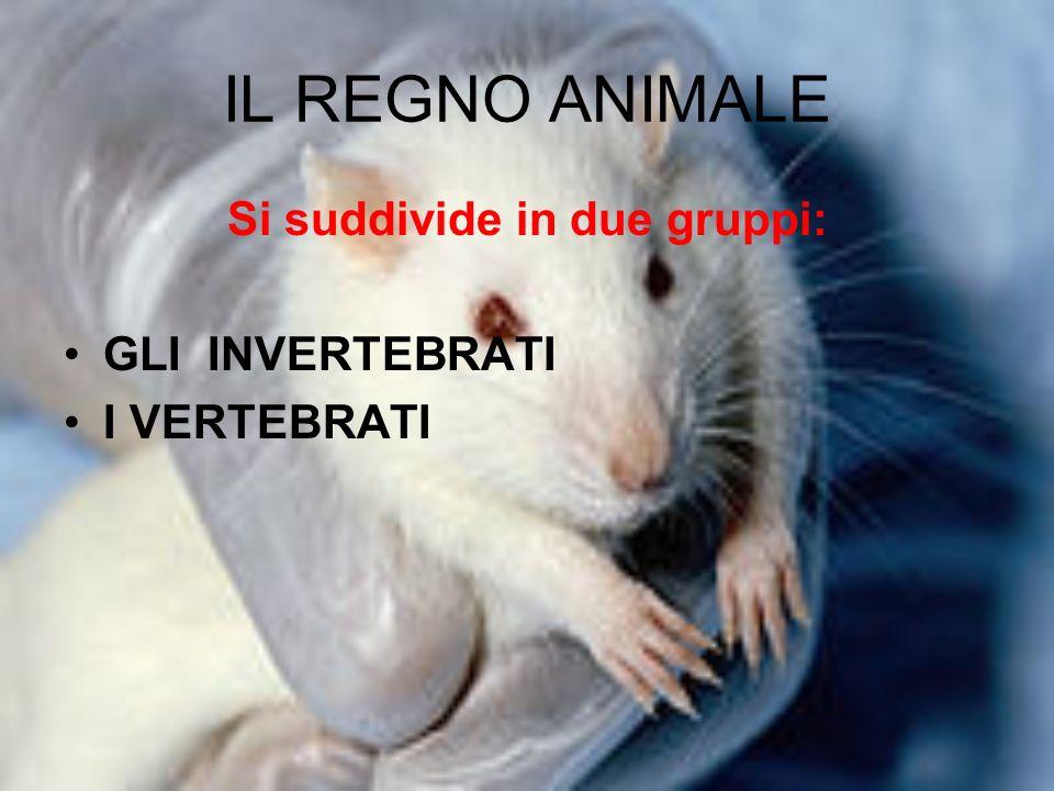 IL REGNO ANIMALE Si suddivide in due gruppi: GLI INVERTEBRATI I VERTEBRATI