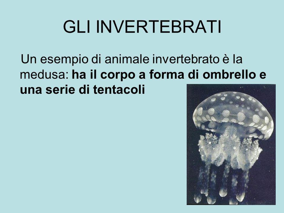 GLI INVERTEBRATI Un esempio di animale invertebrato è la medusa: ha il corpo a forma di ombrello e una serie di tentacoli INVERTEBRATIINVERTEBRATI VER