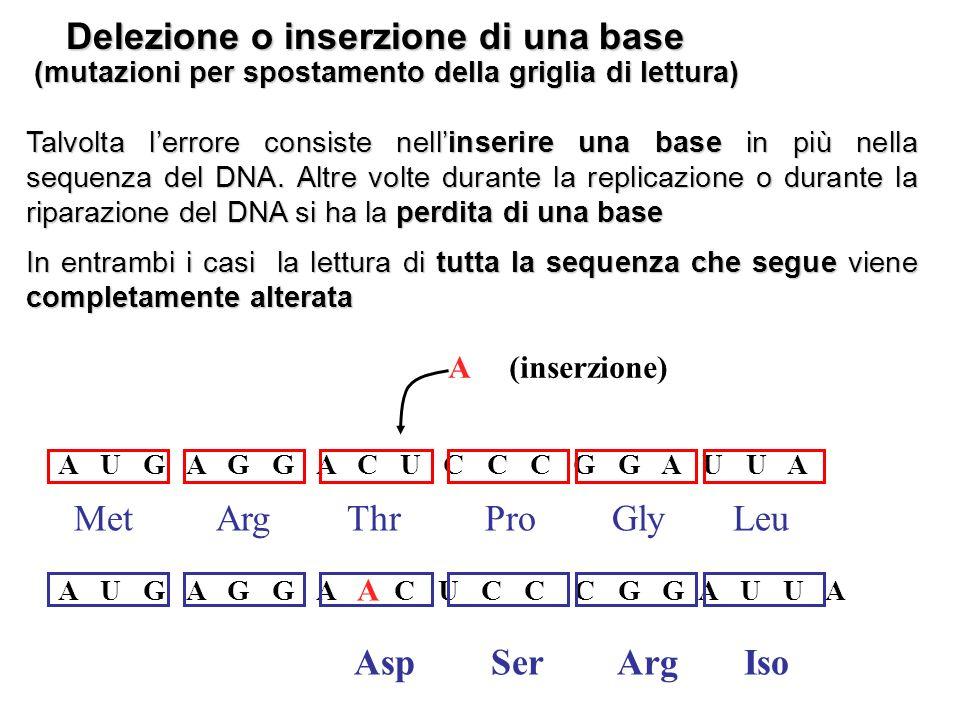 Delezione o inserzione di una base Talvolta lerrore consiste nellinserire una base in più nella sequenza del DNA. Altre volte durante la replicazione