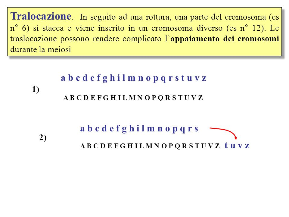 Tralocazione. In seguito ad una rottura, una parte del cromosoma (es n° 6) si stacca e viene inserito in un cromosoma diverso (es n° 12). Le traslocaz