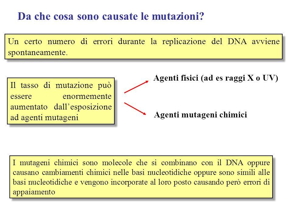 Da che cosa sono causate le mutazioni? Un certo numero di errori durante la replicazione del DNA avviene spontaneamente. Il tasso di mutazione può ess