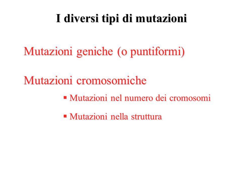 I diversi tipi di mutazioni Mutazioni geniche (o puntiformi) Mutazioni geniche (o puntiformi) Mutazioni cromosomiche Mutazioni cromosomiche Mutazioni