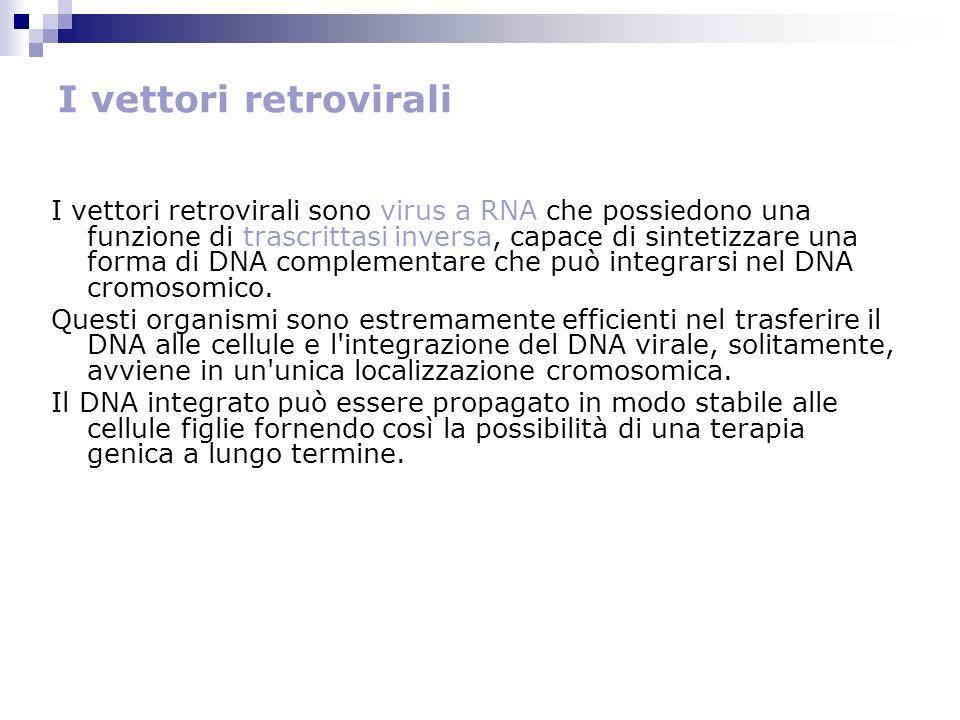 I vettori retrovirali I vettori retrovirali sono virus a RNA che possiedono una funzione di trascrittasi inversa, capace di sintetizzare una forma di