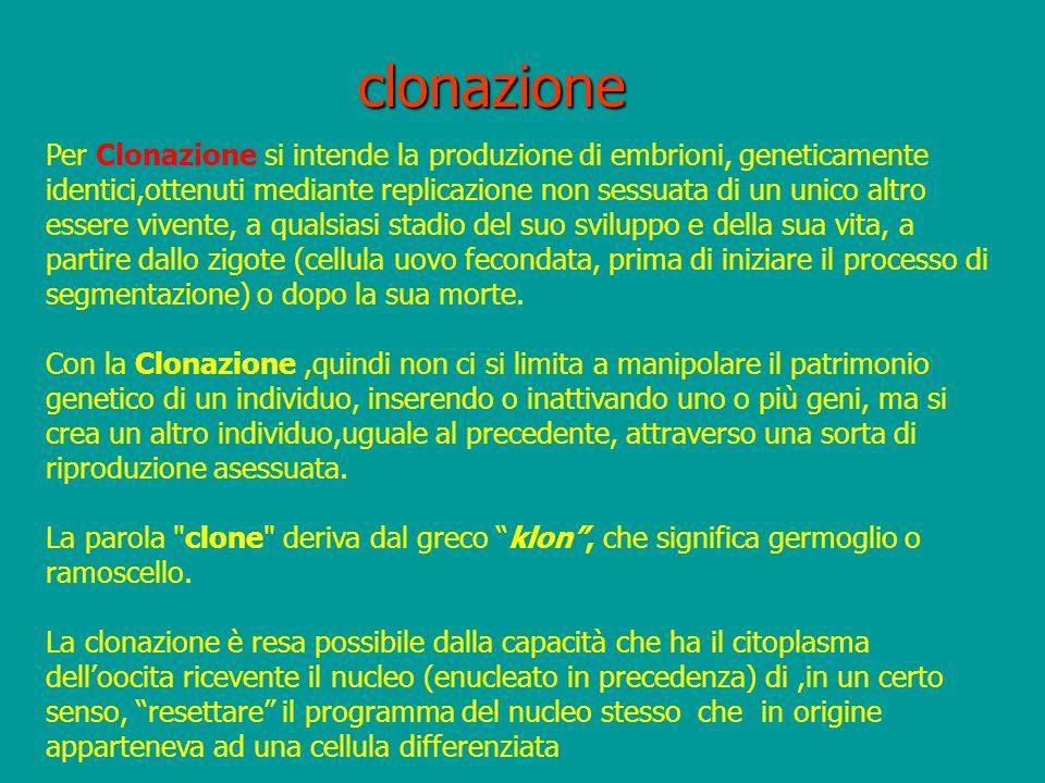 clonazione Per Clonazione si intende la produzione di embrioni, geneticamente identici,ottenuti mediante replicazione non sessuata di un unico altro e