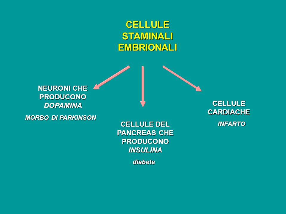MORBO DI PARKINSON CELLULE STAMINALI EMBRIONALI NEURONI CHE PRODUCONO DOPAMINA CELLULE DEL PANCREAS CHE PRODUCONO INSULINA diabete CELLULE CARDIACHE I