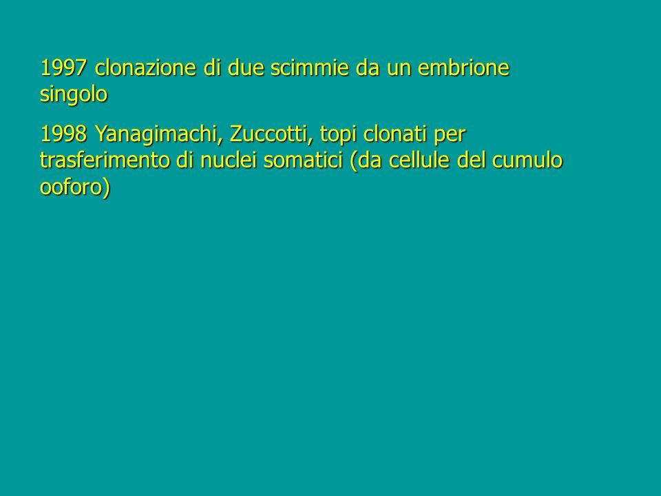 1997 clonazione di due scimmie da un embrione singolo 1998 Yanagimachi, Zuccotti, topi clonati per trasferimento di nuclei somatici (da cellule del cu