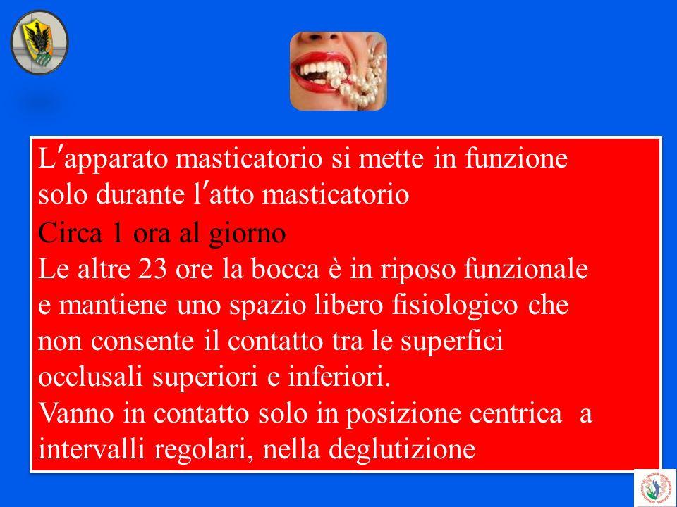 Lapparato masticatorio si mette in funzione solo durante latto masticatorio Circa 1 ora al giorno Le altre 23 ore la bocca è in riposo funzionale e ma