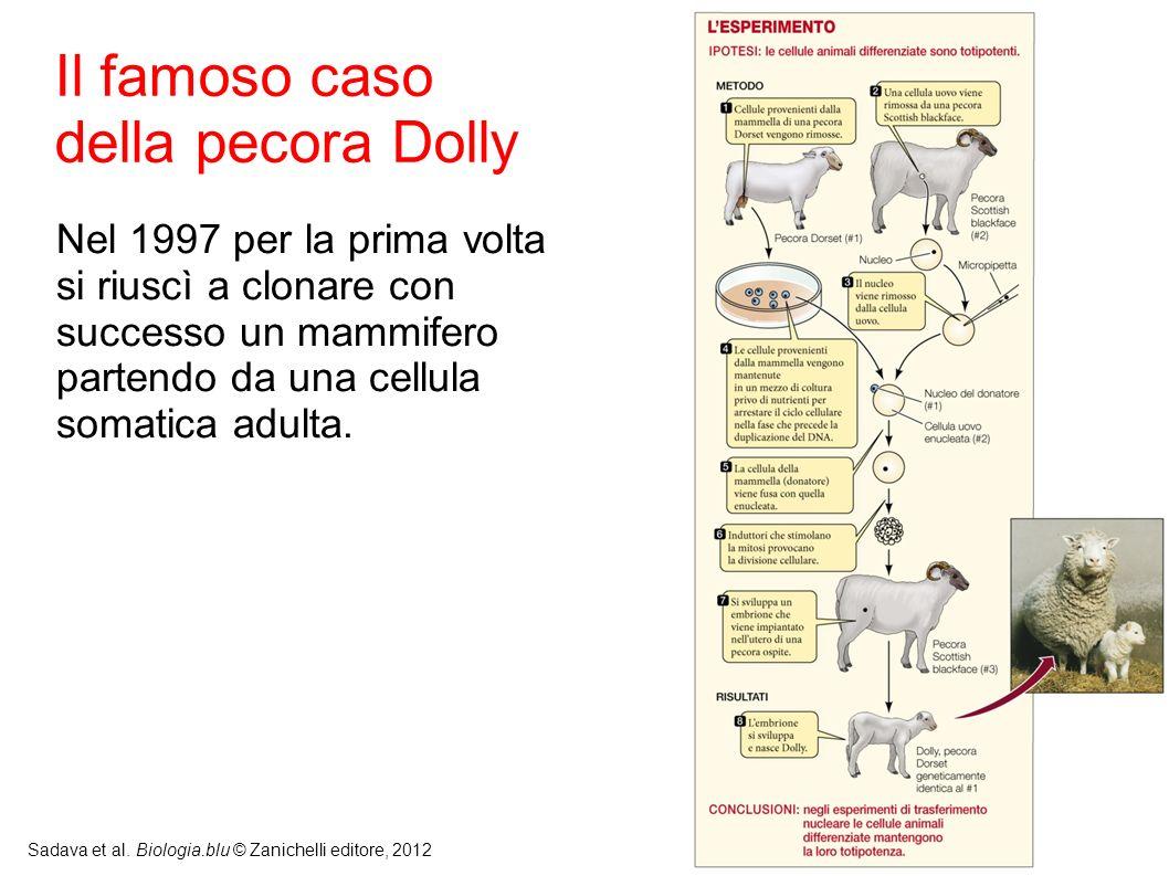 10 Sadava et al. Biologia.blu © Zanichelli editore, 2012 Il famoso caso della pecora Dolly Nel 1997 per la prima volta si riuscì a clonare con success