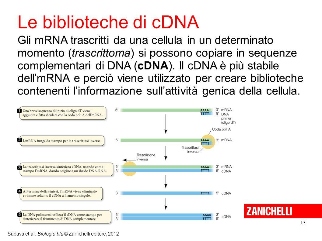13 Sadava et al. Biologia.blu © Zanichelli editore, 2012 Gli mRNA trascritti da una cellula in un determinato momento (trascrittoma) si possono copiar