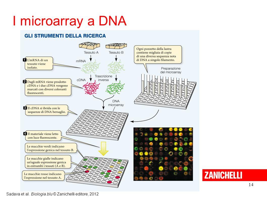 14 Sadava et al. Biologia.blu © Zanichelli editore, 2012 I microarray a DNA