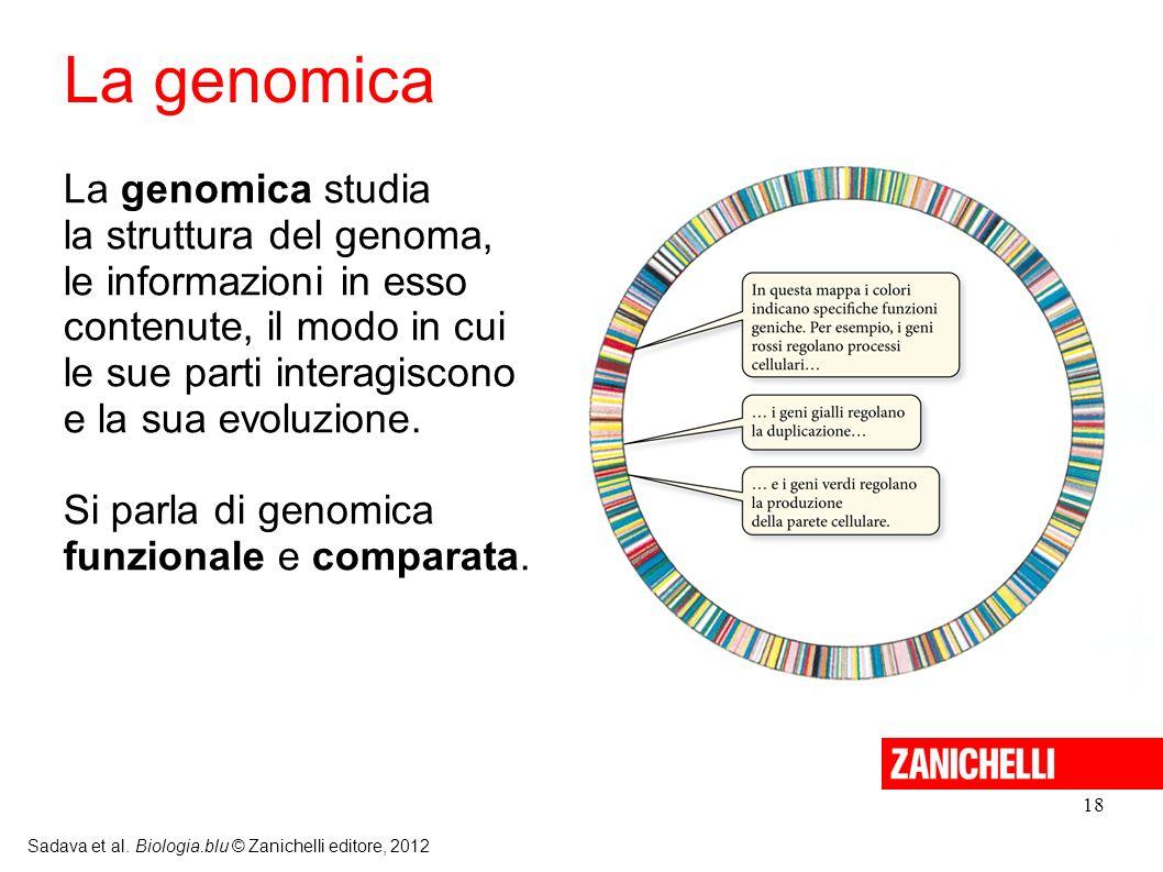 18 Sadava et al. Biologia.blu © Zanichelli editore, 2012 La genomica studia la struttura del genoma, le informazioni in esso contenute, il modo in cui
