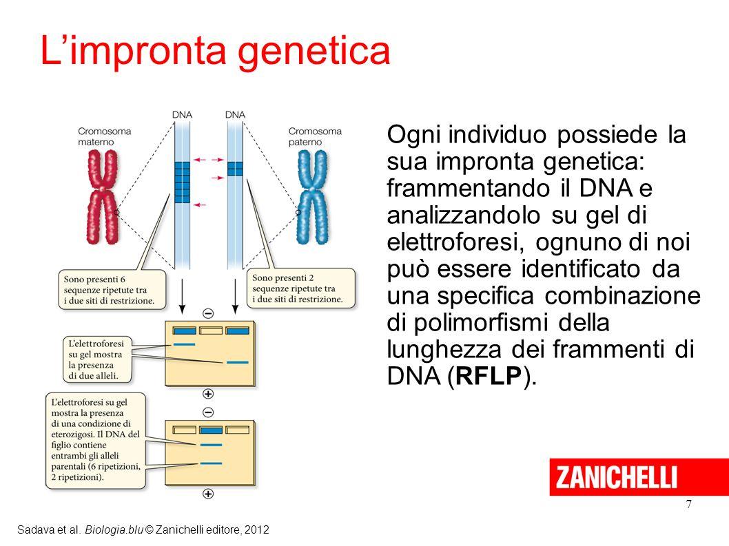 7 Sadava et al. Biologia.blu © Zanichelli editore, 2012 Ogni individuo possiede la sua impronta genetica: frammentando il DNA e analizzandolo su gel d