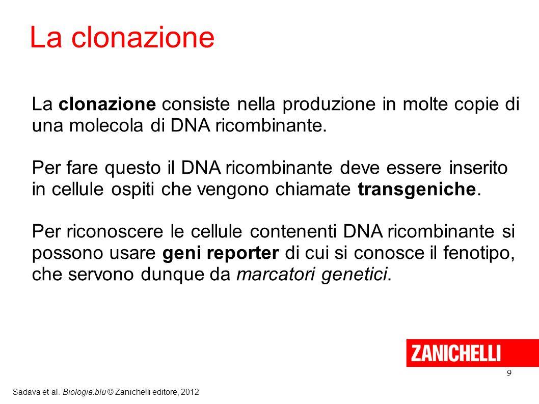 9 Sadava et al. Biologia.blu © Zanichelli editore, 2012 La clonazione consiste nella produzione in molte copie di una molecola di DNA ricombinante. Pe