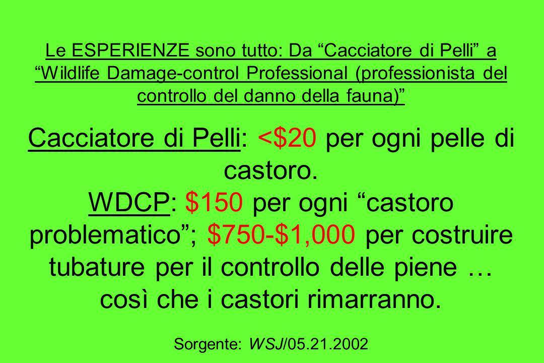 Le ESPERIENZE sono tutto: Da Cacciatore di Pelli a Wildlife Damage-control Professional (professionista del controllo del danno della fauna) Cacciator