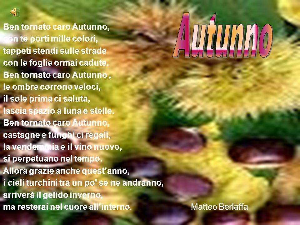 Ben tornato caro Autunno, con te porti mille colori, tappeti stendi sulle strade con le foglie ormai cadute.