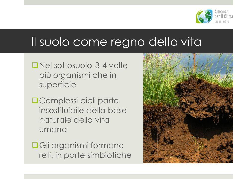 Il suolo come regno della vita Nel sottosuolo 3-4 volte più organismi che in superficie Complessi cicli parte insostituibile della base naturale della