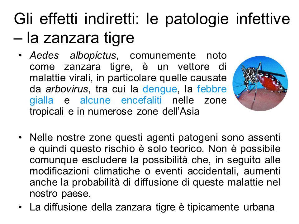 Gli effetti indiretti: le patologie infettive – la zanzara tigre Aedes albopictus, comunemente noto come zanzara tigre, è un vettore di malattie virali, in particolare quelle causate da arbovirus, tra cui la dengue, la febbre gialla e alcune encefaliti nelle zone tropicali e in numerose zone dellAsia Nelle nostre zone questi agenti patogeni sono assenti e quindi questo rischio è solo teorico.