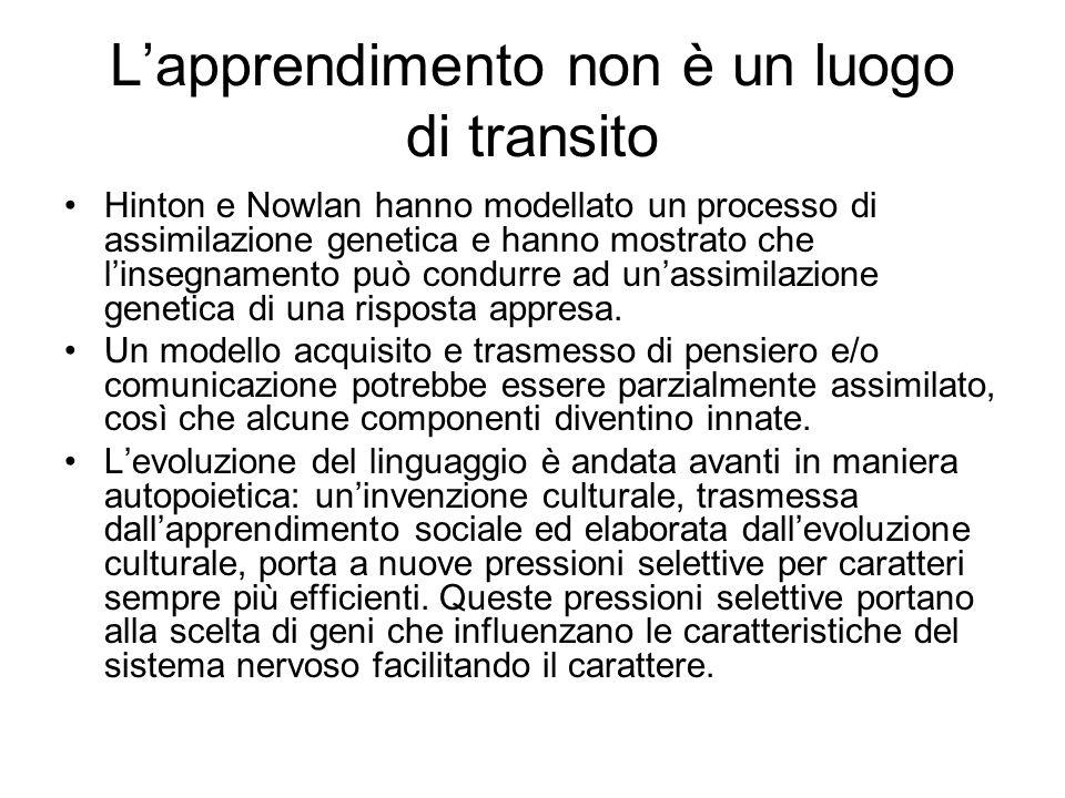 Lapprendimento non è un luogo di transito Hinton e Nowlan hanno modellato un processo di assimilazione genetica e hanno mostrato che linsegnamento può