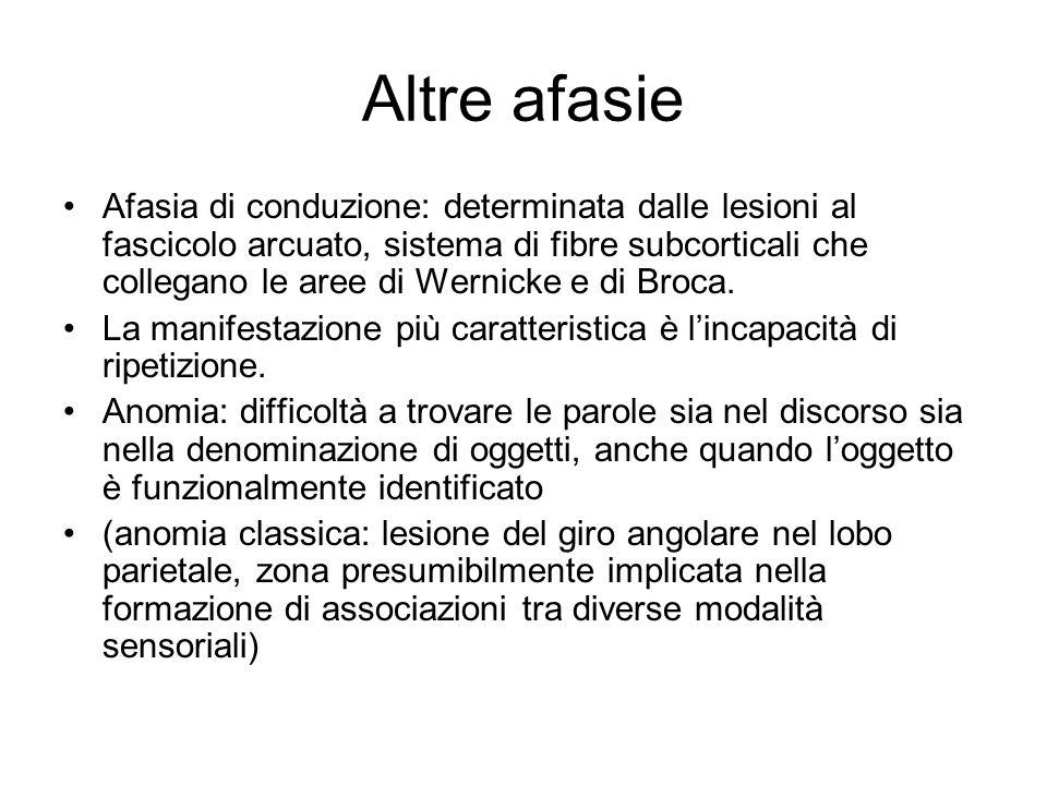 Altre afasie Afasia di conduzione: determinata dalle lesioni al fascicolo arcuato, sistema di fibre subcorticali che collegano le aree di Wernicke e d