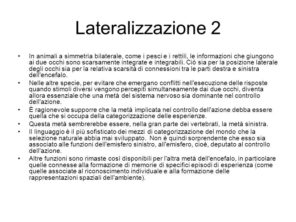 Lateralizzazione 2 In animali a simmetria bilaterale, come i pesci e i rettili, le informazioni che giungono ai due occhi sono scarsamente integrate e