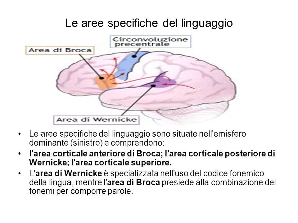 Le aree specifiche del linguaggio Le aree specifiche del linguaggio sono situate nell'emisfero dominante (sinistro) e comprendono: l'area corticale an