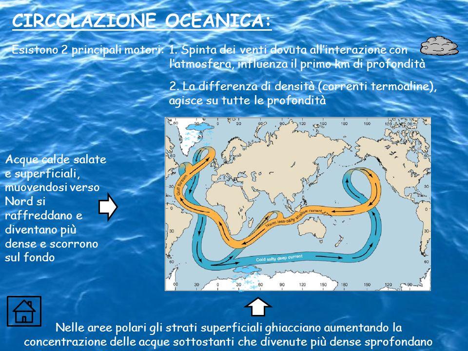 CIRCOLAZIONE OCEANICA: Nelle aree polari gli strati superficiali ghiacciano aumentando la concentrazione delle acque sottostanti che divenute più dens