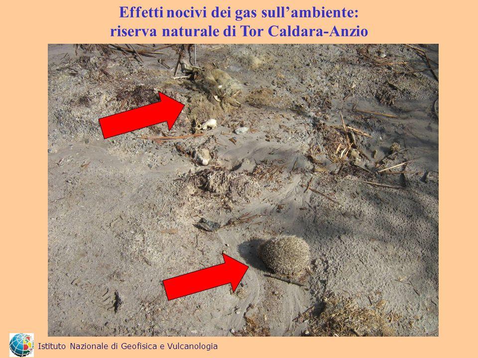 Effetti nocivi dei gas sullambiente: riserva naturale di Tor Caldara-Anzio Istituto Nazionale di Geofisica e Vulcanologia