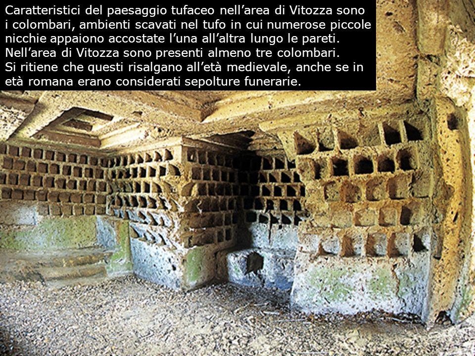 Caratteristici del paesaggio tufaceo nellarea di Vitozza sono i colombari, ambienti scavati nel tufo in cui numerose piccole nicchie appaiono accostat