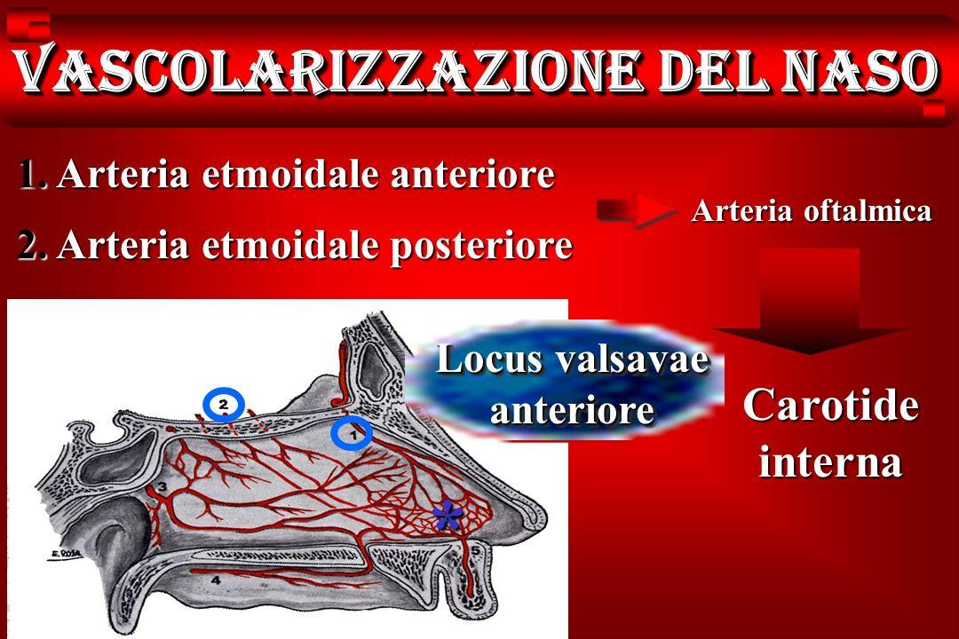 Vascolarizzazione del naso 1. Arteria etmoidale anteriore 2. Arteria etmoidale posteriore Arteria oftalmica Carotide interna Locus valsavae anteriore