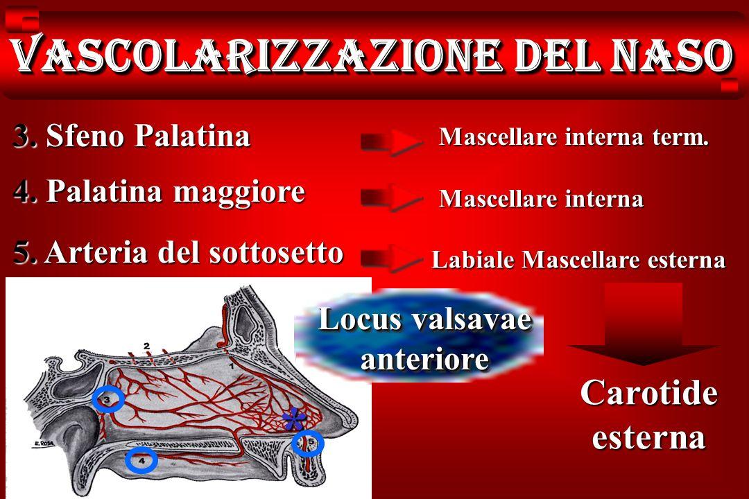 Vascolarizzazione del naso 3. Sfeno Palatina 4. Palatina maggiore 5. Arteria del sottosetto Mascellare interna term. Mascellare interna Labiale Mascel