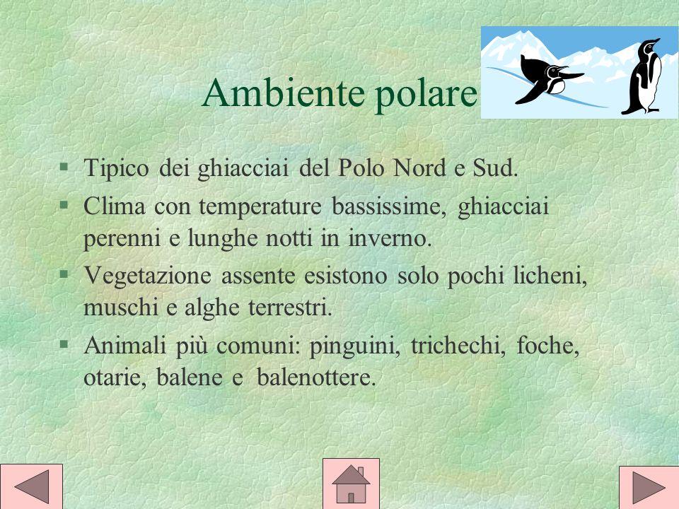 Ambiente polare §Tipico dei ghiacciai del Polo Nord e Sud.