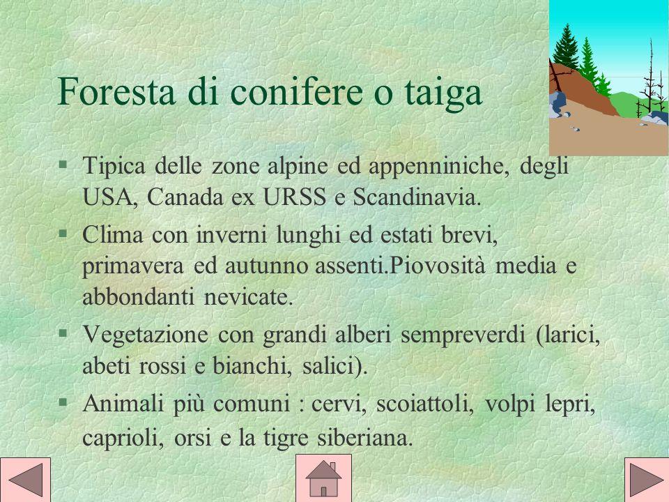 Foresta di conifere o taiga §Tipica delle zone alpine ed appenniniche, degli USA, Canada ex URSS e Scandinavia.