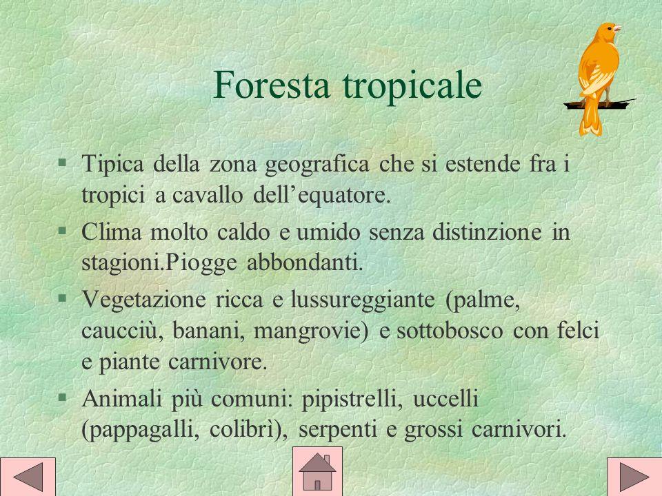 Foresta tropicale §Tipica della zona geografica che si estende fra i tropici a cavallo dellequatore.