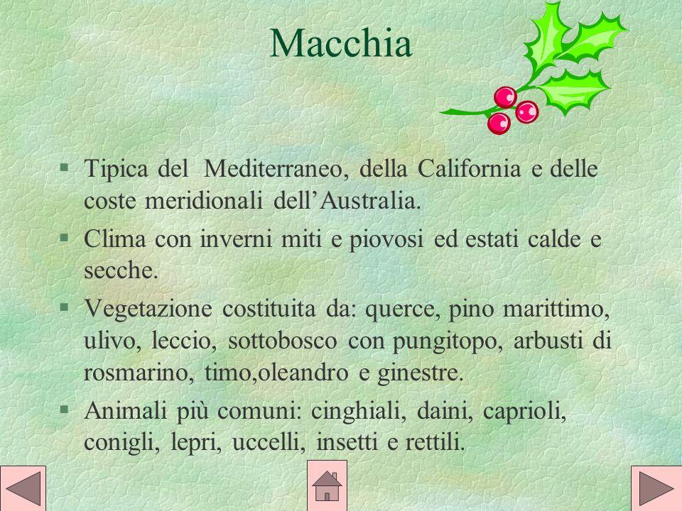 Macchia §Tipica del Mediterraneo, della California e delle coste meridionali dellAustralia.