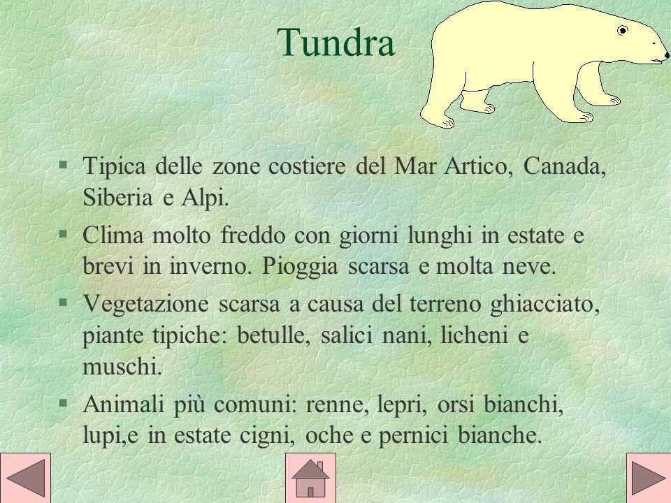 Tundra §Tipica delle zone costiere del Mar Artico, Canada, Siberia e Alpi.