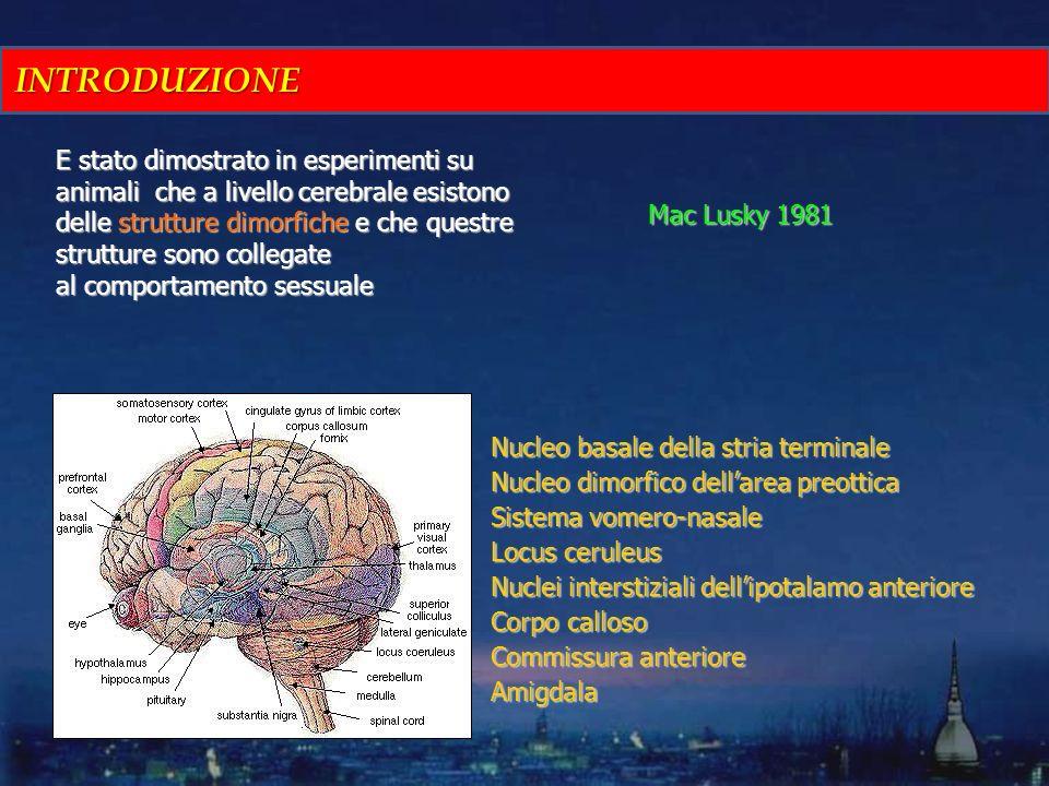E stato dimostrato in esperimenti su animali che a livello cerebrale esistono delle strutture dimorfiche e che questre strutture sono collegate al com