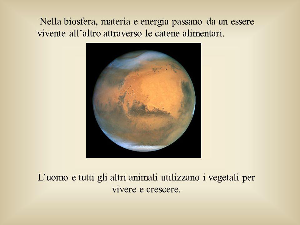 Luomo e tutti gli altri animali utilizzano i vegetali per vivere e crescere. Nella biosfera, materia e energia passano da un essere vivente allaltro a