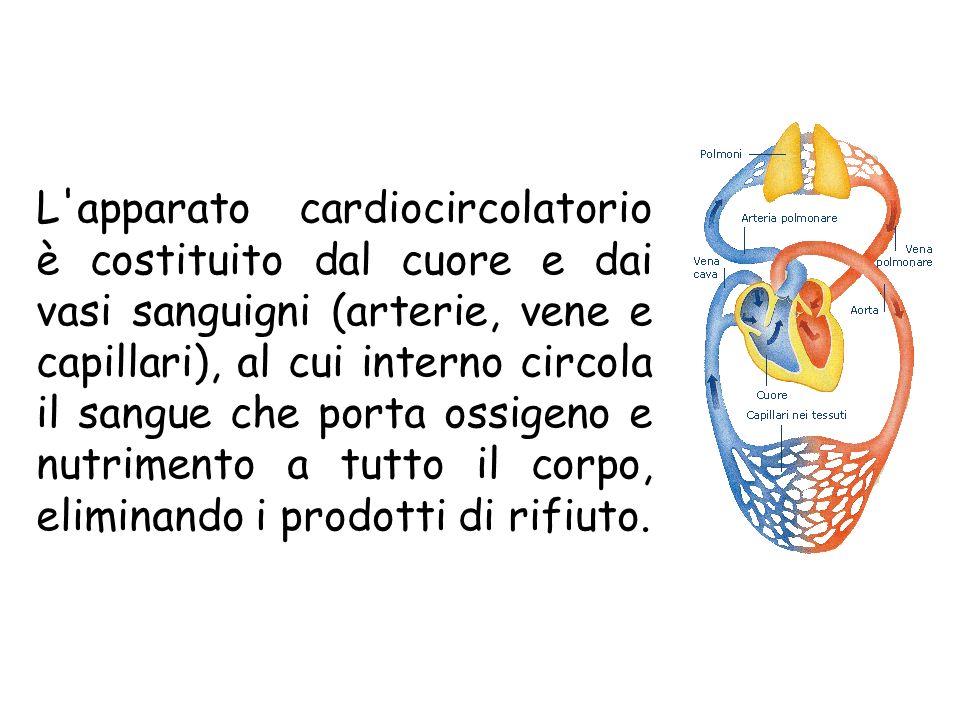 L'apparato cardiocircolatorio è costituito dal cuore e dai vasi sanguigni (arterie, vene e capillari), al cui interno circola il sangue che porta ossi