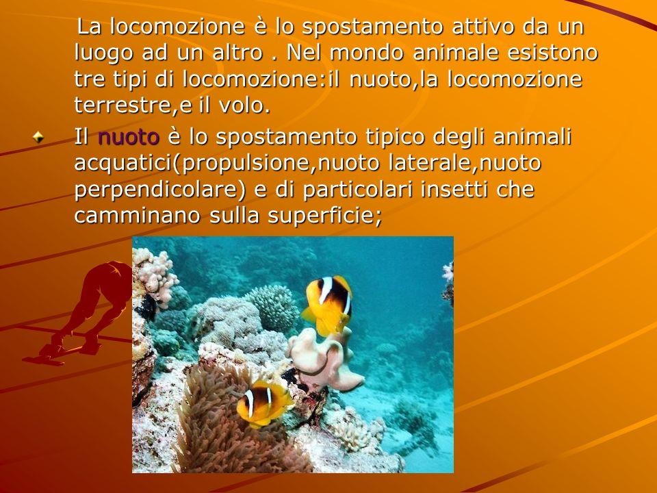 La locomozione è lo spostamento attivo da un luogo ad un altro. Nel mondo animale esistono tre tipi di locomozione:il nuoto,la locomozione terrestre,e