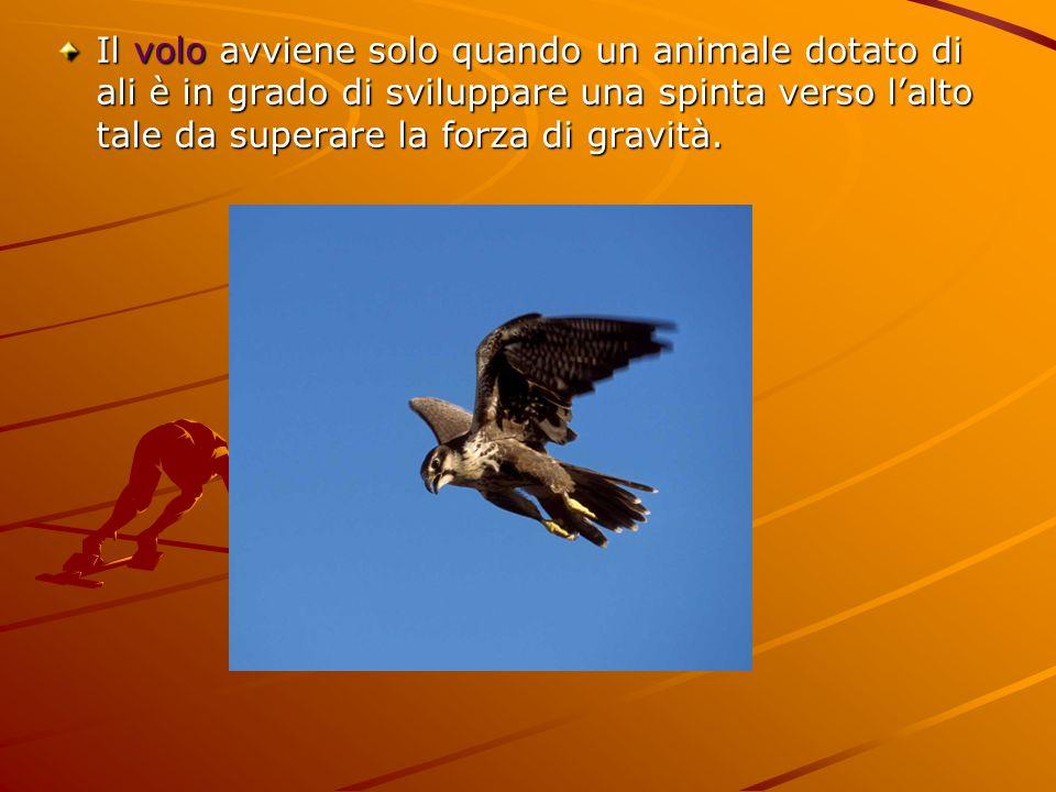 Il volo avviene solo quando un animale dotato di ali è in grado di sviluppare una spinta verso lalto tale da superare la forza di gravità.