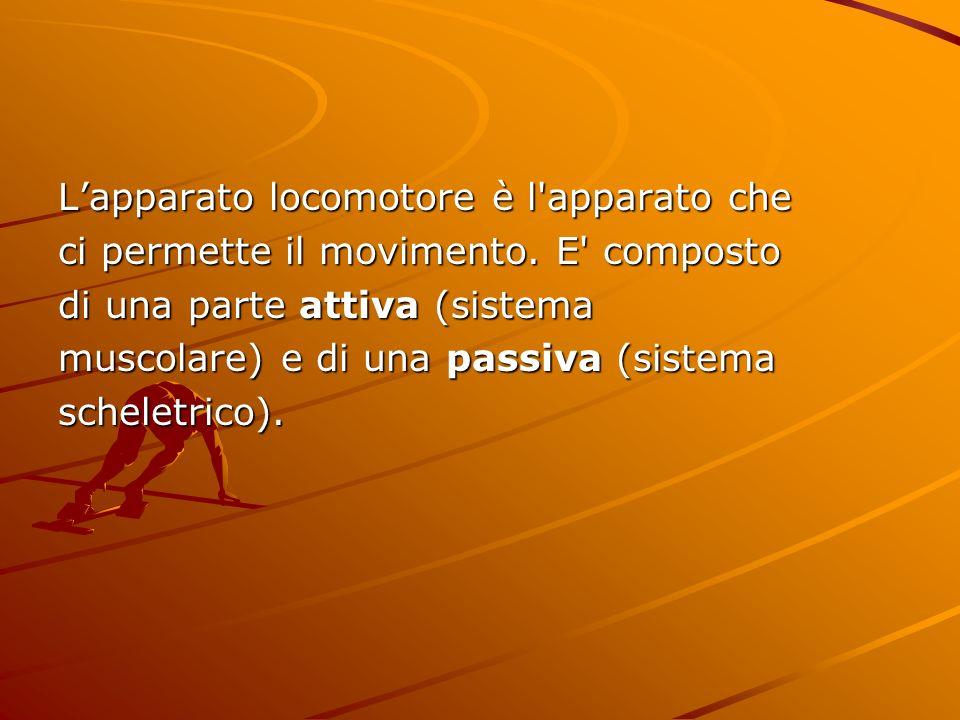 Lapparato locomotore è l'apparato che ci permette il movimento. E' composto di una parte attiva (sistema muscolare) e di una passiva (sistema scheletr
