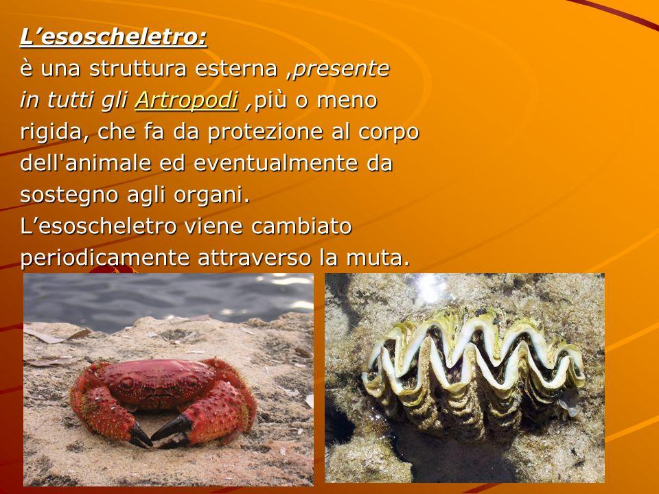 Lesoscheletro: è una struttura esterna,presente in tutti gli Artropodi,più o meno Artropodi rigida, che fa da protezione al corpo dell'animale ed even